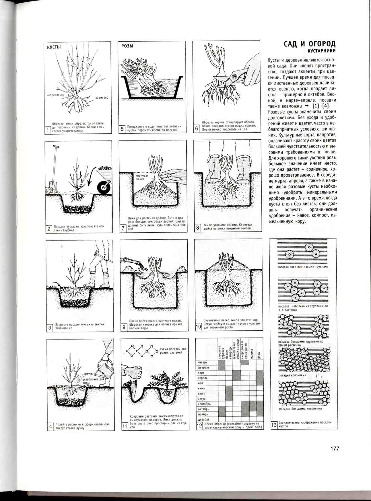 Сад и огород кустарники